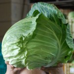 cabbage_s
